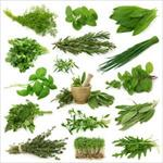 فرایندهای-اسانس-گیری-از-گیاهان-دارویی