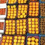 طرح-تجارتی-بازرگانی-میوه