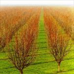 زمان-مصرف-كودها-برای-درختان-و-نحوه-چالکود-کردن