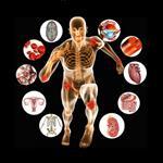 تحقیق-فیزیولوژی-متابولیسم-در-ورزشکاران