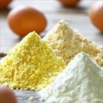 طرح-توجیهی-تولید-پودر-تخم-مرغ