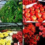 پاورپوینت-طرح-کارآفرینی-تولید-محصولات-گلخانه-ای
