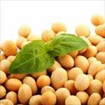 پاورپوینت-خط-تولید-پروتئین-سویا
