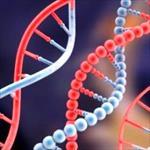 تحقیق-متابولیسم-اسیدهای-نوکلئیک