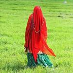 مقاله-بررسی-راهکارهای-توانمندسازی-اقتصادی-زنان-سرپرست-خانوار-روستایی
