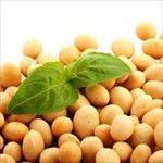 تحقیق-بررسی-اثر-زانتان-و-کاراگینان-بر-خواص-حلالیت-ایزوله-پروتئین-سویا