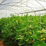 طرح-توجیهی-گلخانه-سبزی-و-صیفی-و-تولید-نشاء