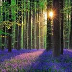 پاورپوینت-جزوه-شناخت-و-بهره-برداری-از-محصولات-فرعی-جنگل-و-مرتع-(دارویی-و-معطر)