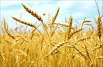 بررسی-راهکارهای-مفید-مقابله-با-ضایعات-مهم-کشاورزی
