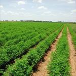 پايان-نامه-كشاورزي-گرايش-زراعت