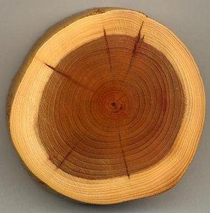 گزارش کار آموزی فنی و حرفه ای، صنایع چوب