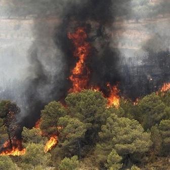 تحقیق آتش سوزی در جنگل