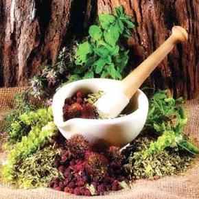 پاورپوینت رابطه انسان با گیاهان دارویی