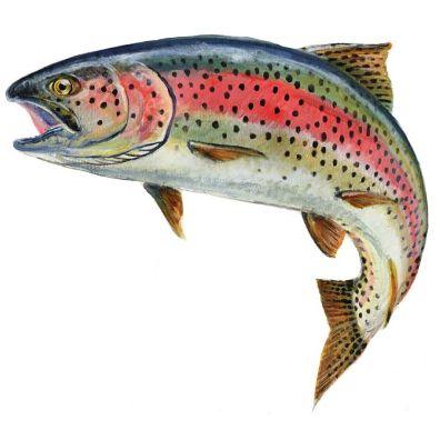 گزارش کارآموزی سيكل پرورش ماهي قزل آلاي رنگين كمان