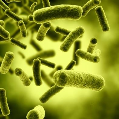 بررسی باکتری اشریشیا کولی (Escherichia coli)