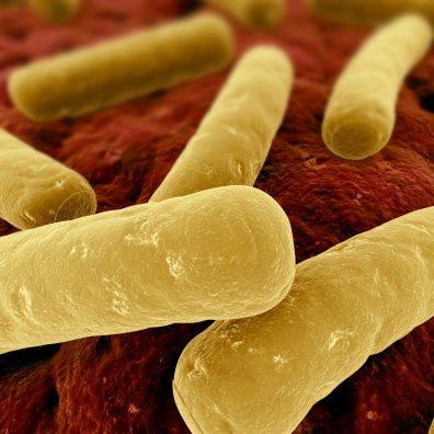 بررسی باکتریهای کلستریدیوم (Clostridium)