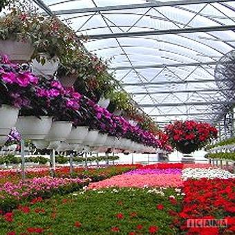 پروژه کارآفرینی تولید گل های زینتی