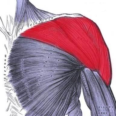 تجزیه و تحلیل فعالیت الکترومیوگرافی عضلات شانه
