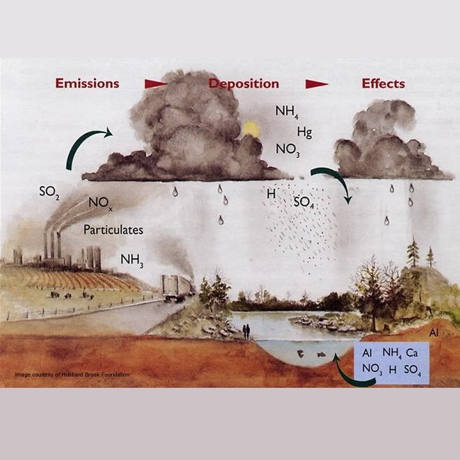 fossil fuels affect environment With the harm of fossil fuels on our environment and the need efficient plants before there is a fossil fuel shortage, with the environment and the.