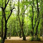 گزارش-کارآموزی-پارک-جنگلی-تلار-قائم-شهر