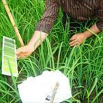 گزارش-کارآموزی-موسسه-تحقیقات-و-آموزش-کشاورزی-(بخش-تحقیقات-خاک-و-آب)