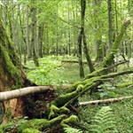 طراحی-و- ی-پارک-های-ملی-و-جنگلی